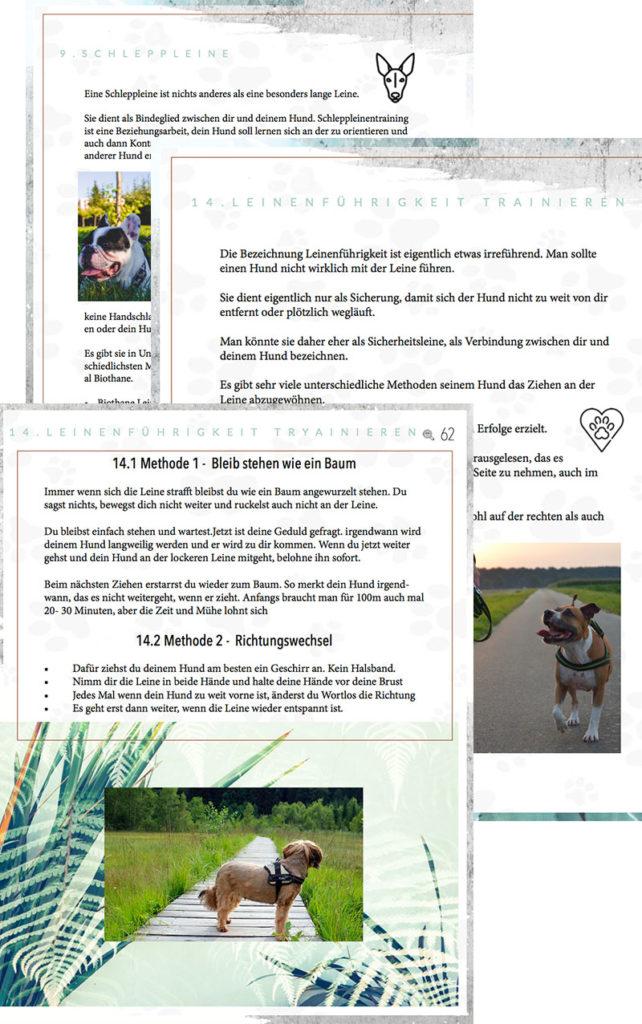 In dieser Bibel geht es darum, die Mensch-Hund Beziehung zu stärken und deinen Hund in allen Bereichen zu deinem Traumhund zu erziehen